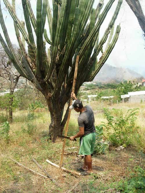 Felix limpiando Yotojoro que cayo en el terreno al lado de nuestra casa